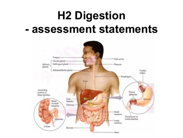 H2 Digestion - assessment statements