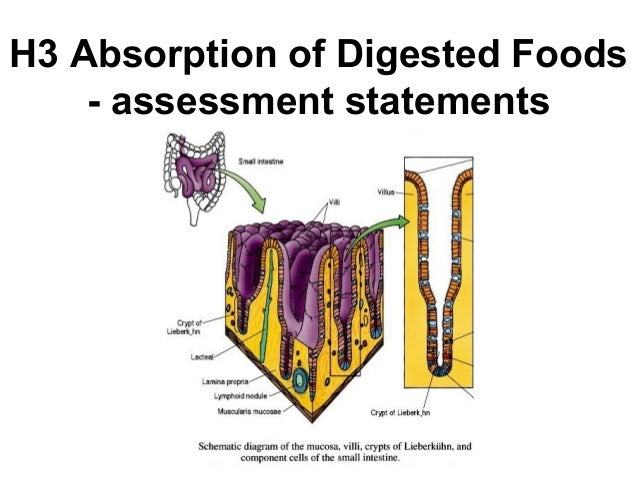 H3 Absorption of Digested Foods - assessment statements