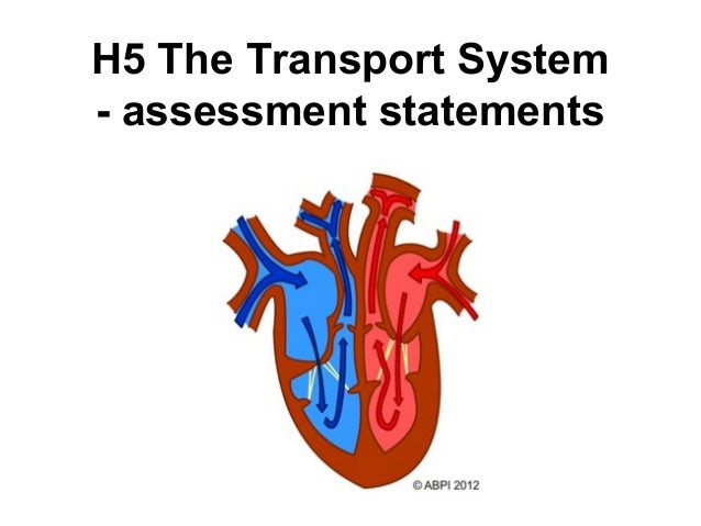 H5 The Transport System - assessment statements