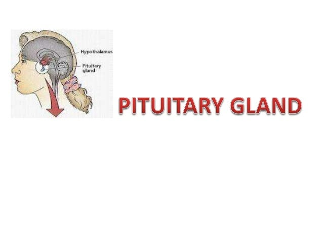 INTRODUCTION    What is the pituitary gland?The pituitary gland (sometimes called thehypophysis) is a small gland that dan...