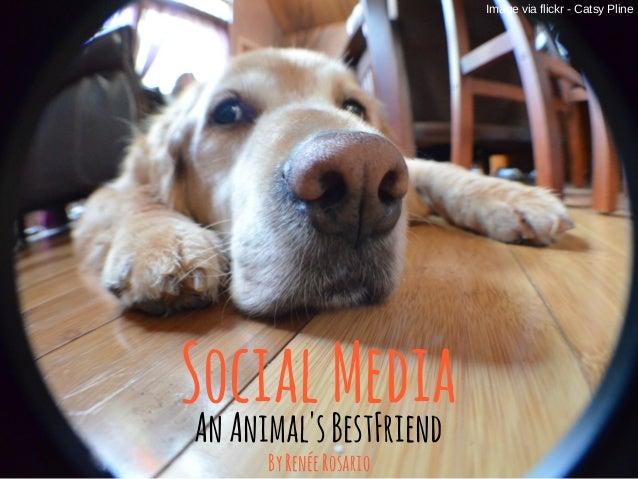 SocialMedia AnAnimal'sBestFriend Image via flickr - Catsy Pline ByRenéeRosario