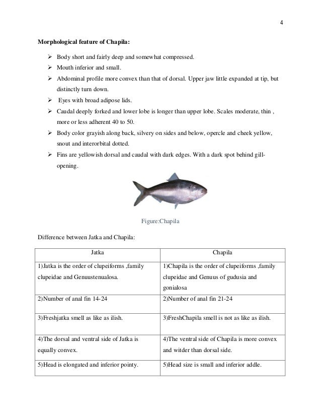 Assignment on difference and feature of jatka and chapila
