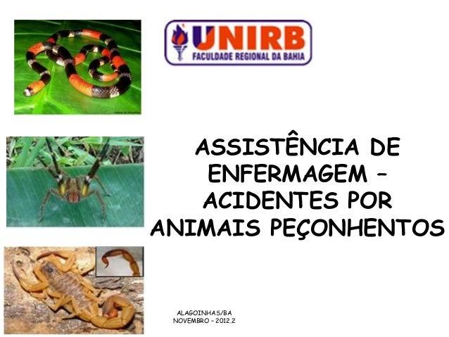 ASSISTÊNCIA DE    ENFERMAGEM –   ACIDENTES PORANIMAIS PEÇONHENTOS  ALAGOINHAS/BA NOVEMBRO – 2012.2