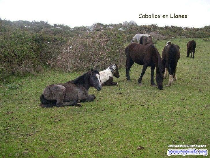 Caballos en  Llanes