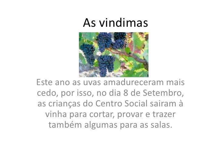 As vindimas<br />Este ano as uvas amadureceram mais cedo, por isso, no dia 8 de Setembro, as crianças do Centro Social sai...
