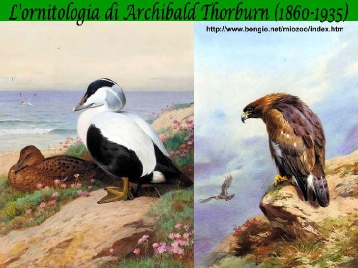 Archibald Thorburn1