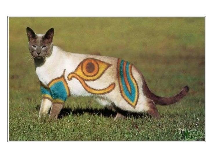 Gatos pintados Slide 2