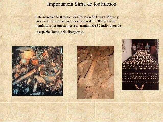 Importancia Sima de los huesos Está situada a 500 metros del Portalón de Cueva Mayor y en su interior se han encontrado má...