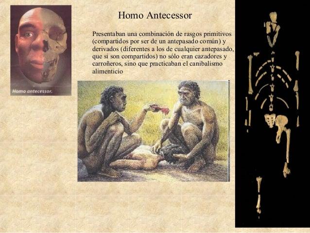 Homo Antecessor Presentaban una combinación de rasgos primitivos (compartidos por ser de un antepasado común) y derivados ...