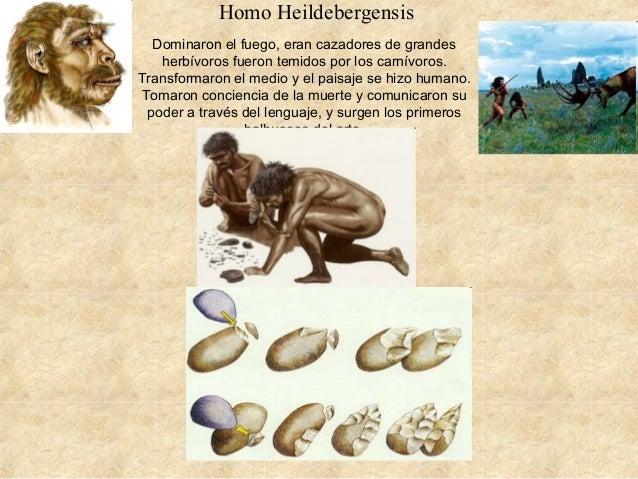 Homo Heildebergensis Dominaron el fuego, eran cazadores de grandes herbívoros fueron temidos por los carnívoros. Transform...