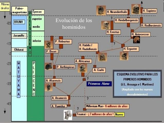 Evolución de los hominidos