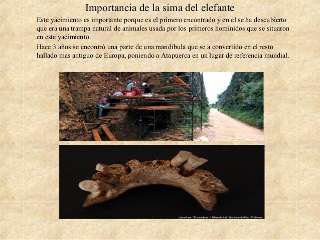 Importancia de la sima del elefante Este yacimiento es importante porque es el primero encontrado y en el se ha descubiert...