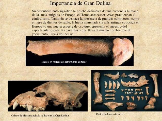 Importancia de Gran Dolina Su descubrimiento significó la prueba definitiva de una presencia humana de las más antiguas de...