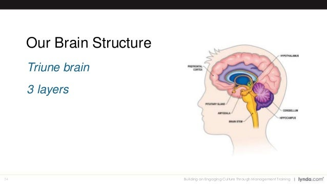 an introduction to the three layers of the brain There are three layers of meninges around the brain and spinal cord (these are continuous between the two structures) the outermost layer is the dura mater, the toughest and most.