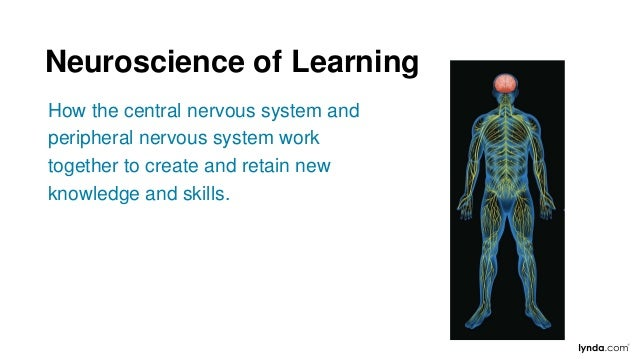 How the central nervous system and peripheral nervous system work together to create and retain new knowledge and skills. ...