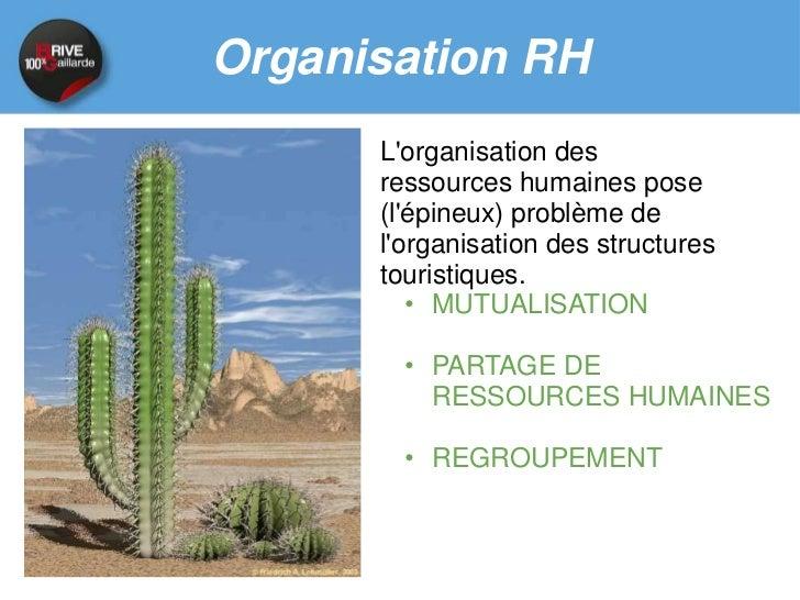 Organisation RH    Exemple : Community Manager collectif en AlsaceUn community manager pour septpages au niveau du CRT : A...