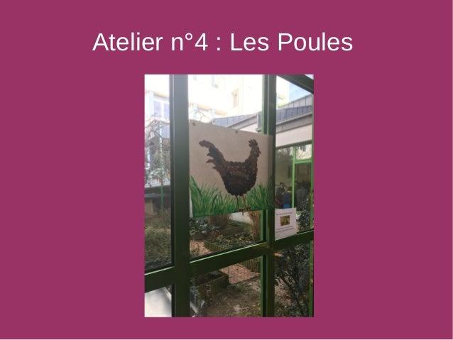 Atelier n°4 : Les Poules