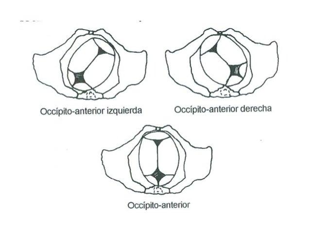 El dolor en los riñones y en lo bajo del vientre después del acto sexual