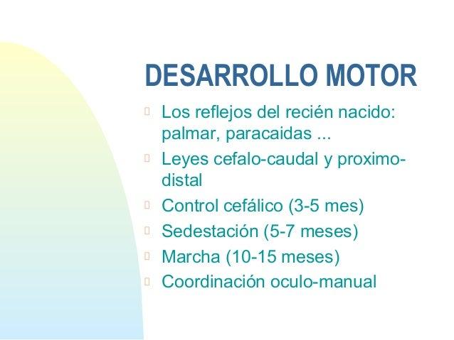 DESARROLLO MOTORLos reflejos del recién nacido:palmar, paracaidas ...Leyes cefalo-caudal y proximo-distalControl cefálico ...