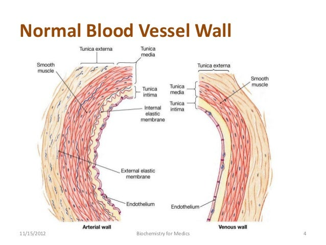 4  normal blood vessel