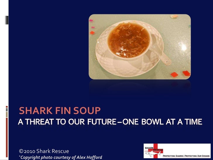 A  threat  to  our  future – one  bowl  at  a  time<br />SHARK FIN SOUP<br />©2010 Shark Rescue<br />*Copyright photo cour...