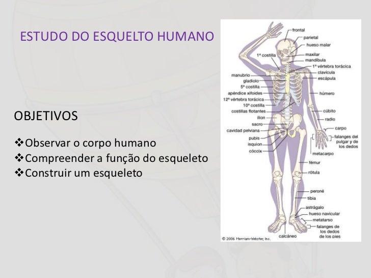 ESTUDO DO ESQUELTO HUMANOOBJETIVOSObservar o corpo humanoCompreender a função do esqueletoConstruir um esqueleto