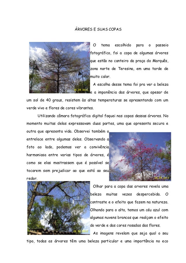 ÁRVORES E SUAS COPASO tema escolhido para o passeiofotográfico, foi a copa de algumas árvoresque estão no canteiro da praç...