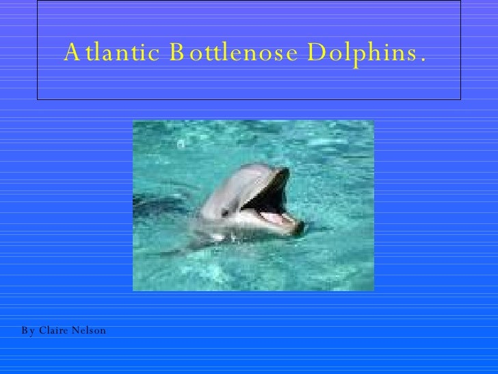 Atlantic Bottlenose Dolphins.   By Claire Nelson