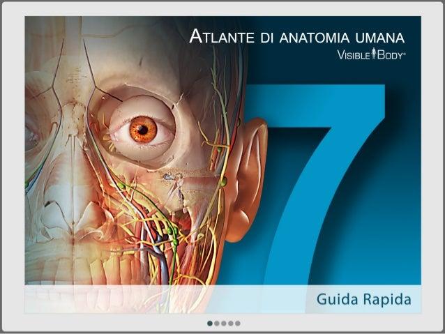 ATLANTE DI ANATOMIA UMANA VISIBLETBODW  Guida Rapida