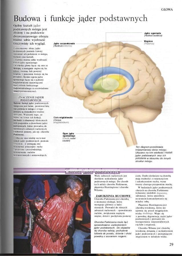 Atlas Anatomii Peter Abrahams