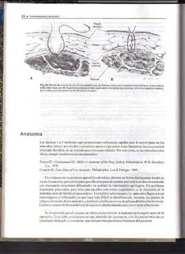 Excepcional Perro Anatomía Hueso De La Pierna Bandera - Imágenes de ...