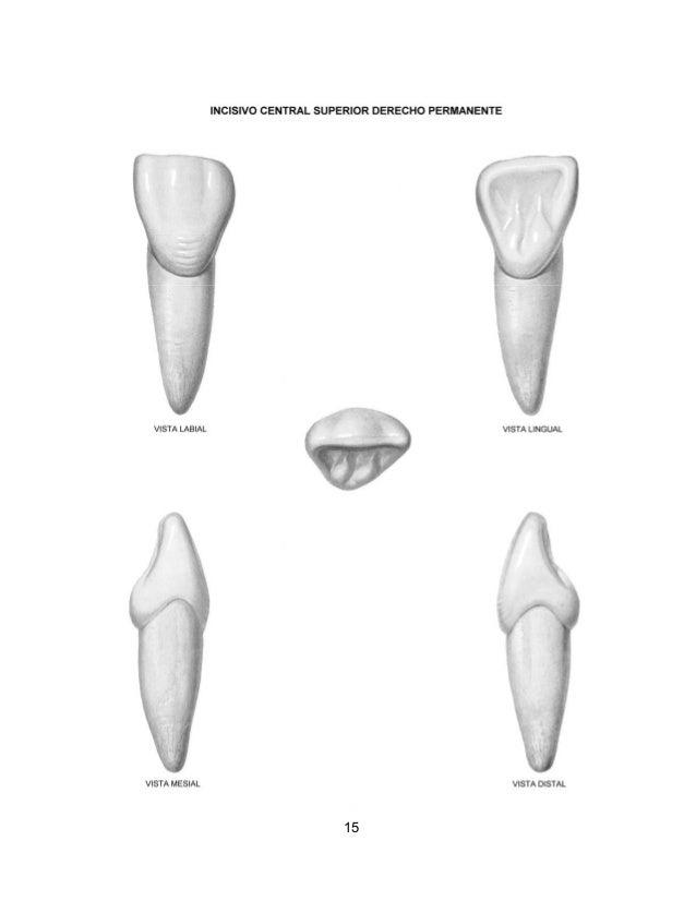 Atlas de anatomia dental sam