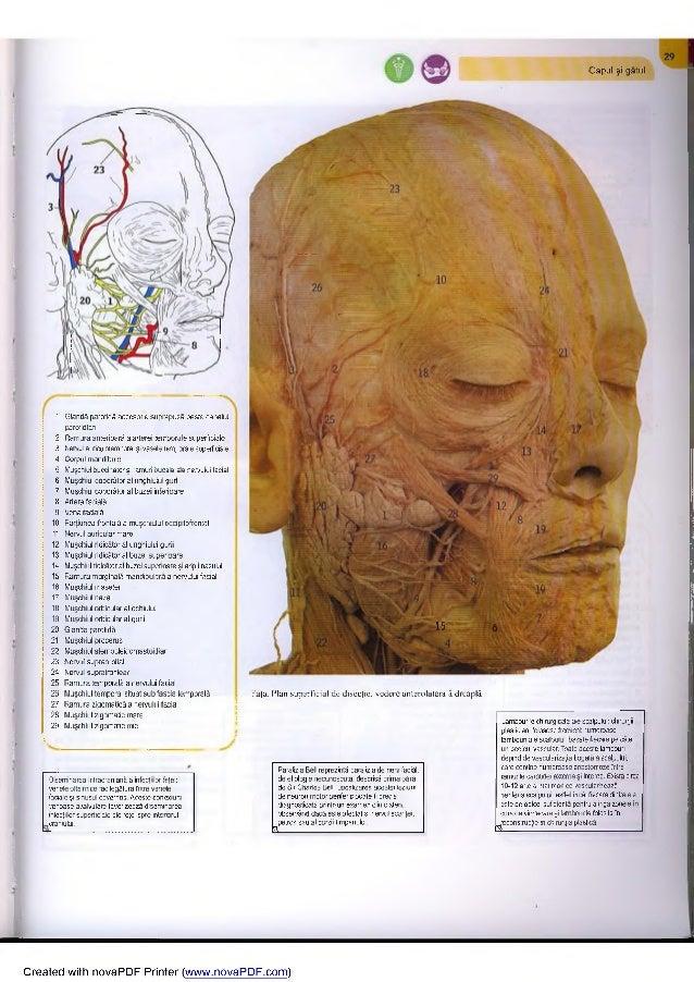 capul omului