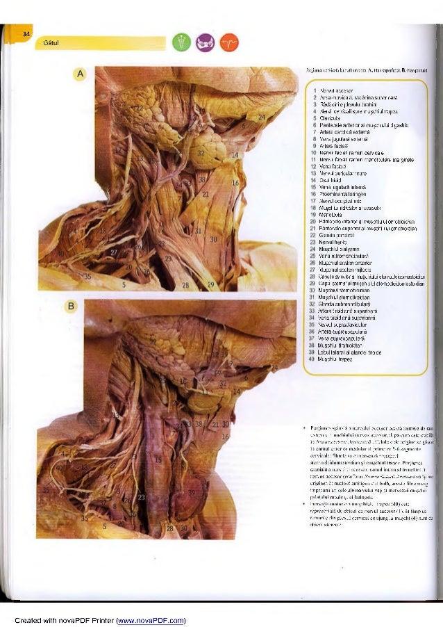 Durere de spate dureroasa in picioare