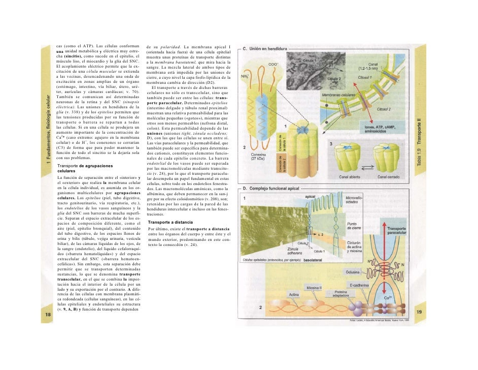 Atlas de bolsillo de fisiología humana