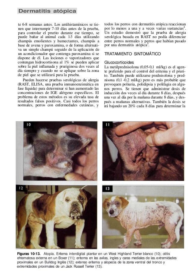 Atlas de enfermedaes de piel en perro y gato