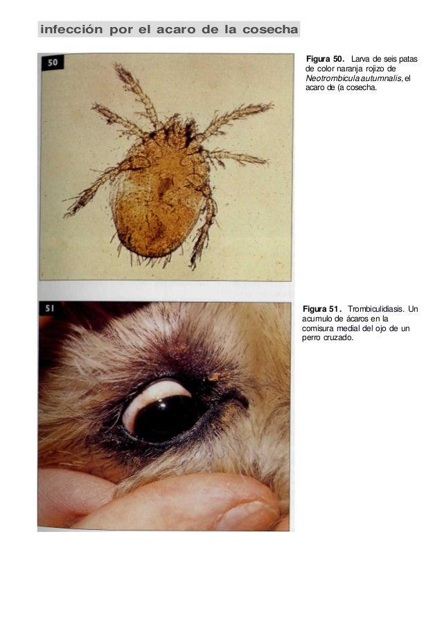 Enfermedades de la Piel en Perros y Gatos