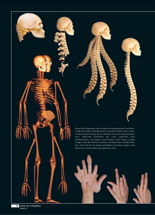 Niedlich Erforschung Schöpfung Mit Anatomie Und Physiologie ...