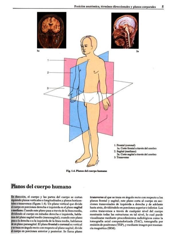 Bonito Planos Cuerpo Anatomía Imágenes - Imágenes de Anatomía Humana ...