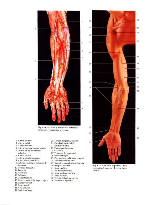 Atlas fotográfico de anatomia espanhol (3ª ed) (1)