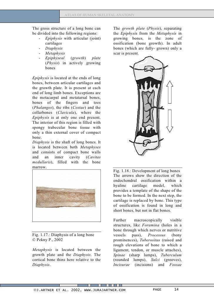 Atlas of human_skeletal_anatomy