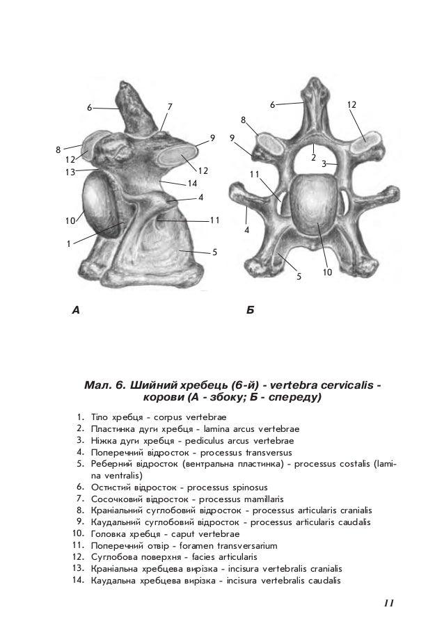 Atemberaubend Menschliche Anatomie Und Physiologie Laborhandbuch ...