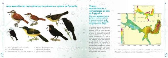 ATLAS•daQualidadedeÁguadoReservatóriodaPampulhaATLAS•daQualidadedeÁguadoReservatóriodaPampulha4948Aves passeriformes mais ...