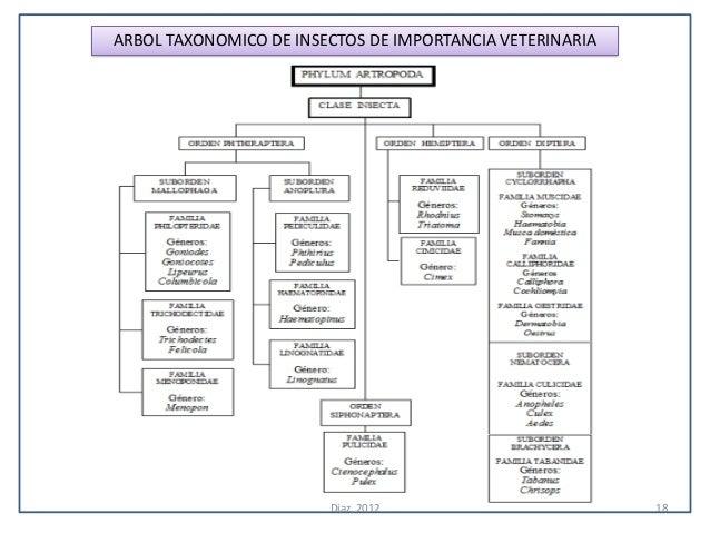 ARBOL TAXONOMICO DE INSECTOS DE IMPORTANCIA VETERINARIA                        Diaz, 2012                        18