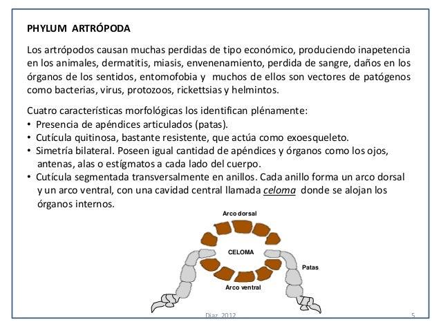PHYLUM ARTRÓPODALos artrópodos causan muchas perdidas de tipo económico, produciendo inapetenciaen los animales, dermatiti...