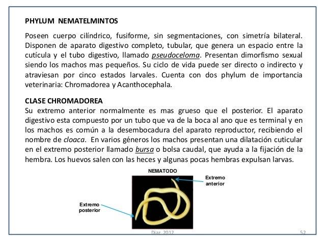 PHYLUM NEMATELMINTOSPoseen cuerpo cilíndrico, fusiforme, sin segmentaciones, con simetría bilateral.Disponen de aparato di...
