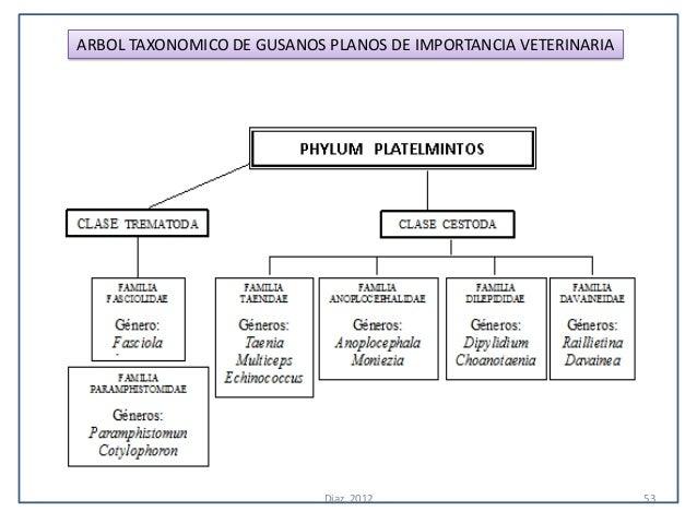 ARBOL TAXONOMICO DE GUSANOS PLANOS DE IMPORTANCIA VETERINARIA                            Diaz, 2012                       ...