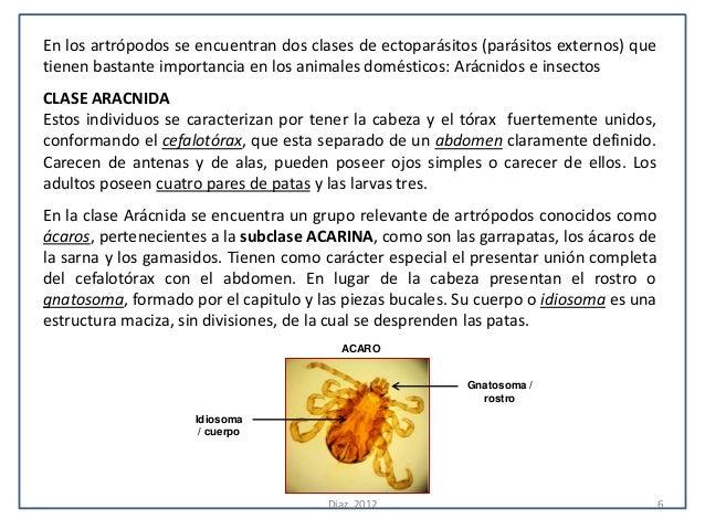 En los artrópodos se encuentran dos clases de ectoparásitos (parásitos externos) quetienen bastante importancia en los ani...