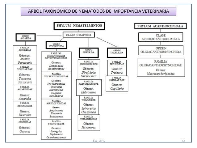 ARBOL TAXONOMICO DE NEMATODOS DE IMPORTANCIA VETERINARIA                         Diaz, 2012                        61