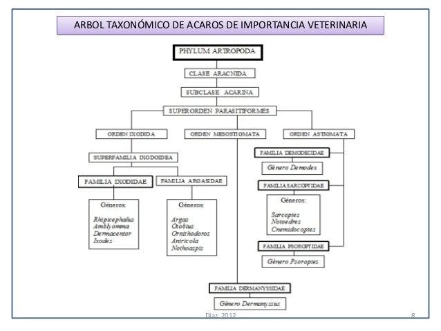 ARBOL TAXONÓMICO DE ACAROS DE IMPORTANCIA VETERINARIA                       Diaz, 2012                       8